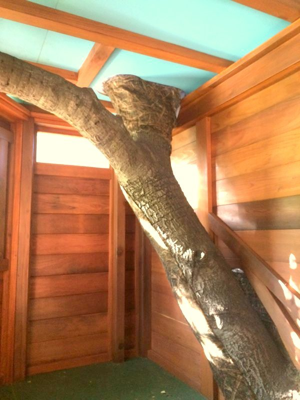 A Peek in a Custom Treehouse Window