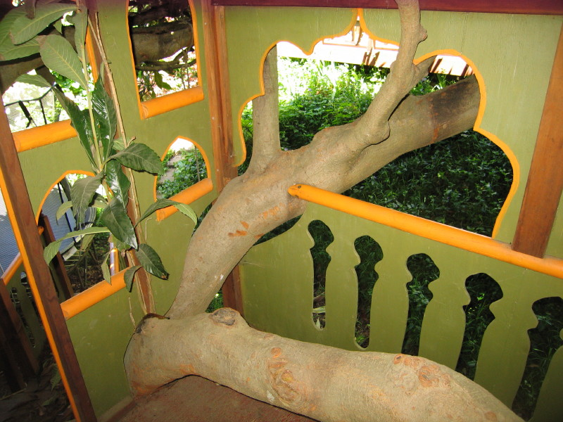 Inside view of Taj Mahal treehouse